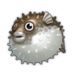 Porcupinefish.png