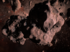 Faross asteroid.png