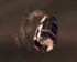 Pas-55 starship wreckage.png