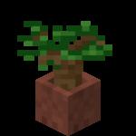 Sazenice tmavého dubu v květináči.png