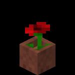 Vlčí mák v květináči.png