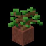 Sazenice dubu v květináči.png