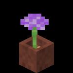 Česnek v květináči.png