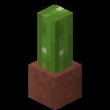 Eingetopfter Kaktus.png