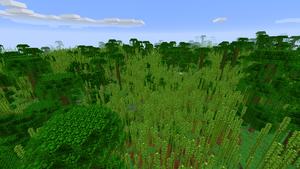 Bambusdschungel.png