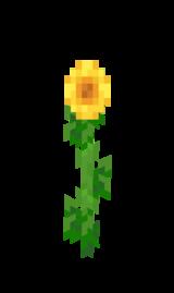 Sonnenblume.png