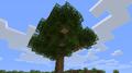 Baum Große Eiche Alt.png
