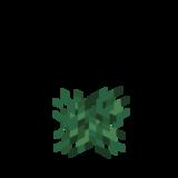 Süßbeerenstrauch Phase 1.png