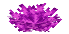 Blasenkorallenfächer.png
