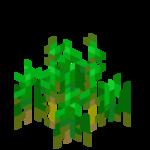 Weizenpflanzen5.png