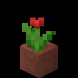Eingetopfte rote Tulpe.png