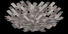 Abgestorbener Feuerkorallenfächer.png