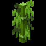 Bambu de hojas cortas.png