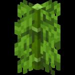 Bambu de hojas largas.png