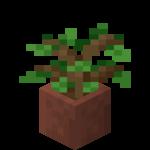 Pousse de chêne en pot.png