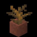 Arbuste mort en pot.png