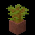 Pousse d'acacia en pot.png