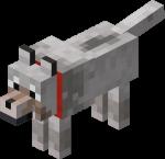 Loup apprivoisé