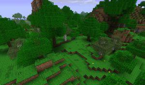 Forêt tropicale.jpg