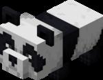 Bébé panda.png