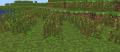 Graines d'herbes hautes.png
