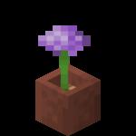Allium en pot.png