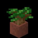 Pousse de chêne noir en pot.png