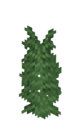 Large Fern JE2 BE2.png