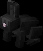 Black Rabbit.png