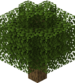 Balloon Oak Tree.png