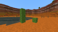 Common Cacti.png