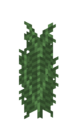 Large Fern JE1 BE1.png