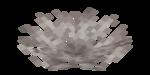 Dead Horn Coral Fan.png
