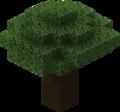 Dark Oak Tree2.png