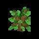 Oak Sapling JE5 BE2.png
