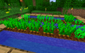 Carrots Growing.png