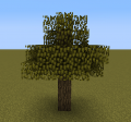 Acacia-leaved Oak.png