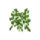 Birch Sapling JE1 BE1.png