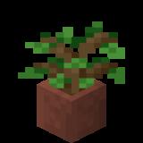 Potted Oak Sapling JE2 BE2.png