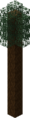 Tall Pine Tree.png