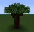 Spruce Oak Tree.png