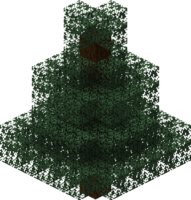 Spruce Tree.png