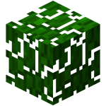 Jungle Leaves.png