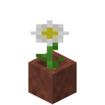Potted Oxeye Daisy.png