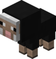 Baby Black Sheep Revision 1.png