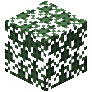 Plik:Świerkowe liście.png