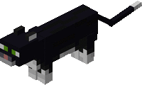 Plik:Czarny kot.png