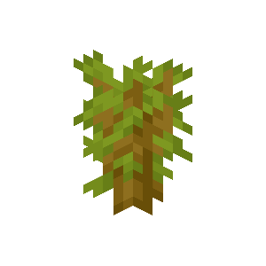 Plik:Sadzonka akacji.png