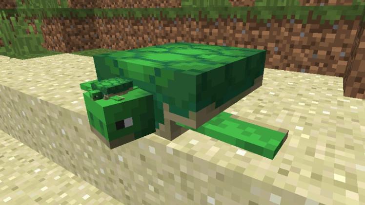 Plik:Żółwie.jpg