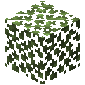Plik:Brzozowe liście.png